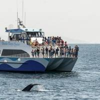 Photo courtesy of Harbor Breeze Cruises
